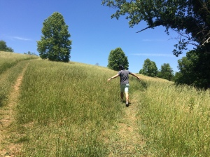 Hubs frolicking in the meadows